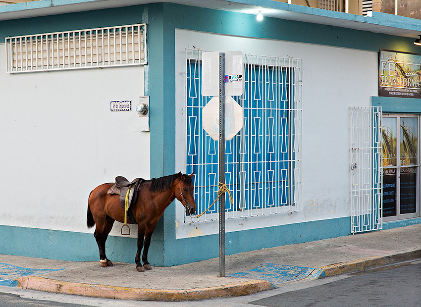 Horse in Isabel